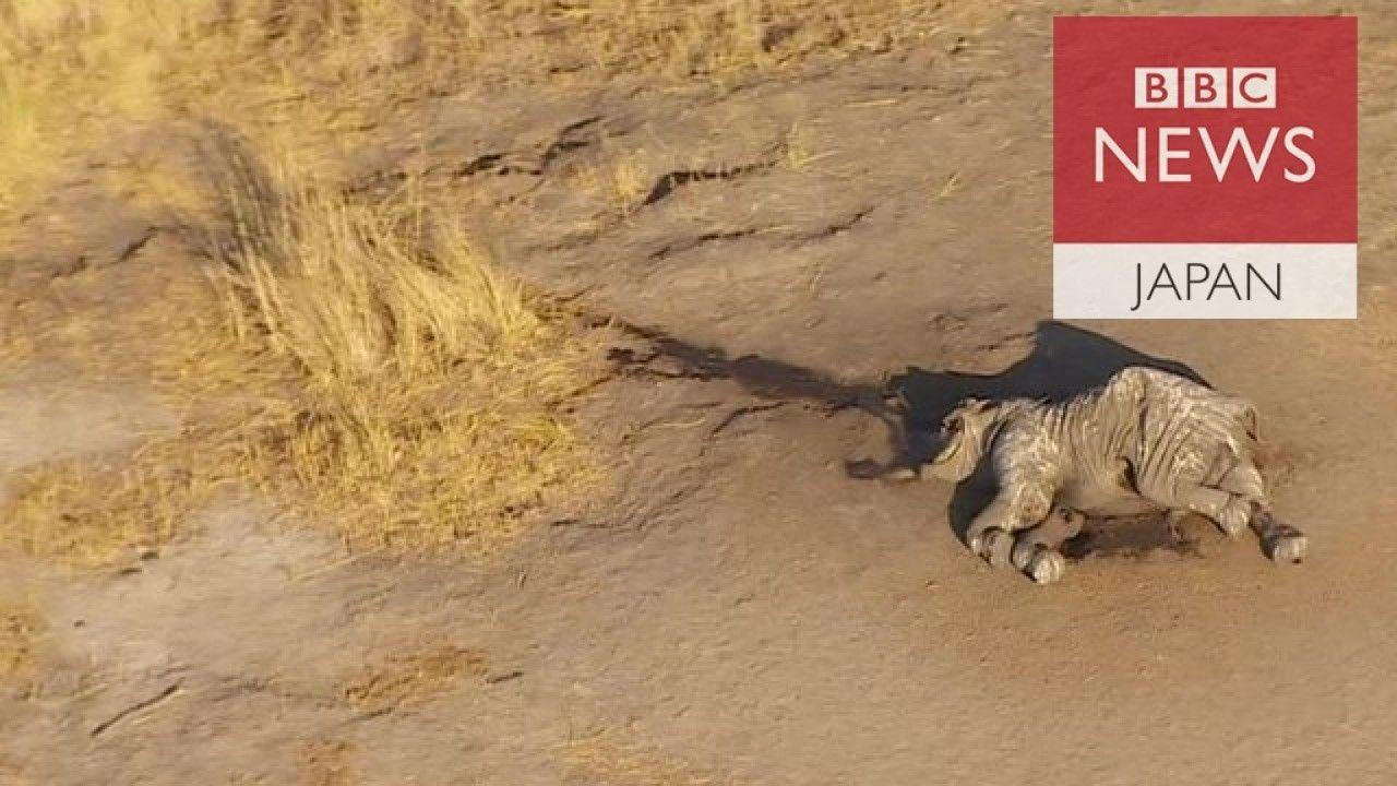 密猟でアフリカのゾウ激減 あちらにもこちらにも死体