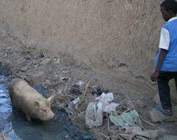 コレラ被害は地球温暖化がもたらしたのか