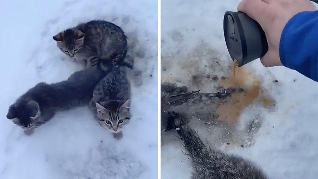 子猫3匹、尻尾が地面に凍りつき動けず コーヒーが命救う