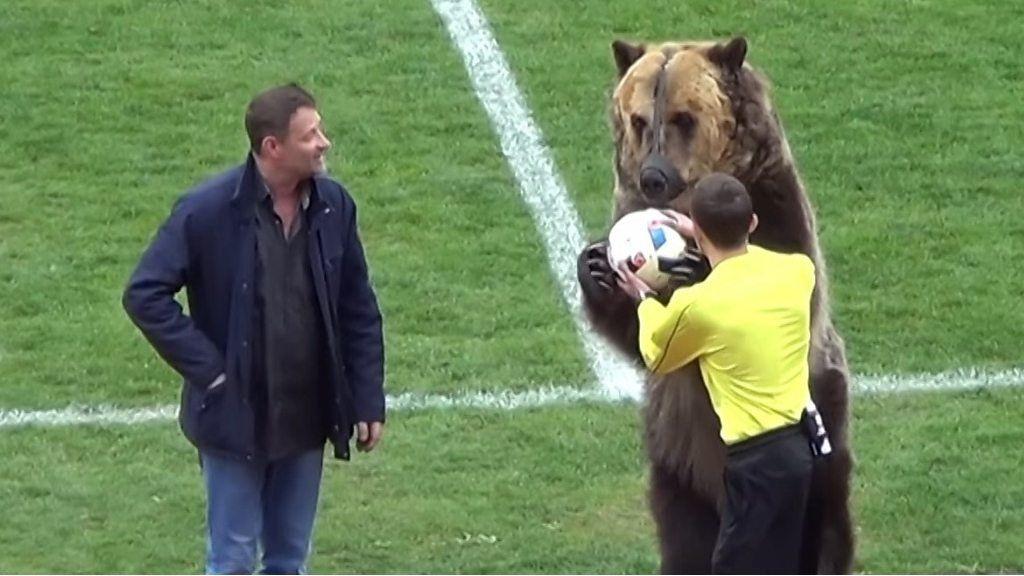サッカーの試合でクマが演技 「非人道的」と批判