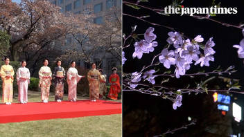 Cherry blossom season 2018 in Tokyo, Japan