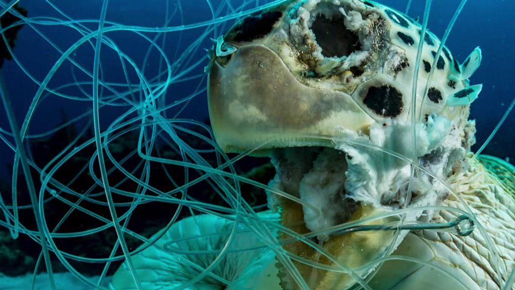 釣り糸に絡まって死んだウミガメ 写真がコンテストで1位に