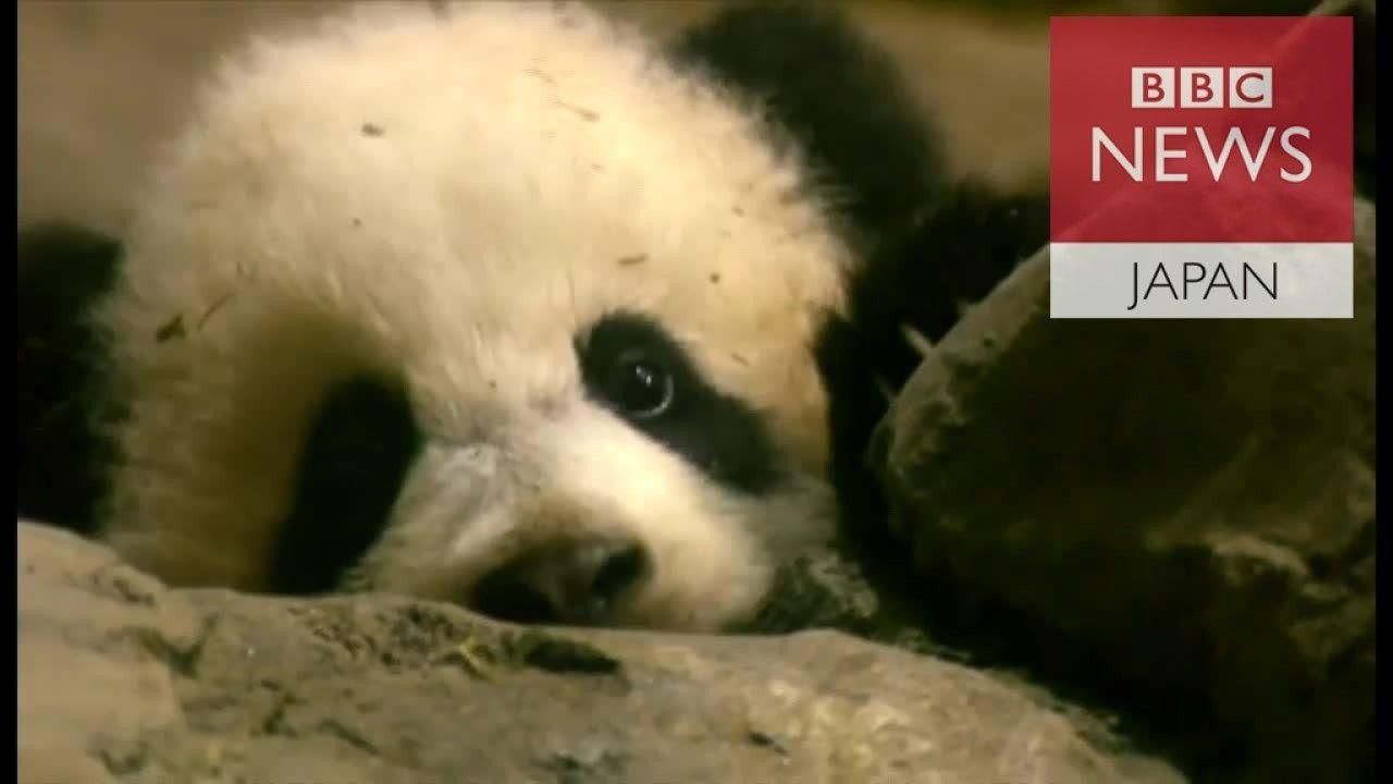 米動物園の人気パンダ、中国に返還