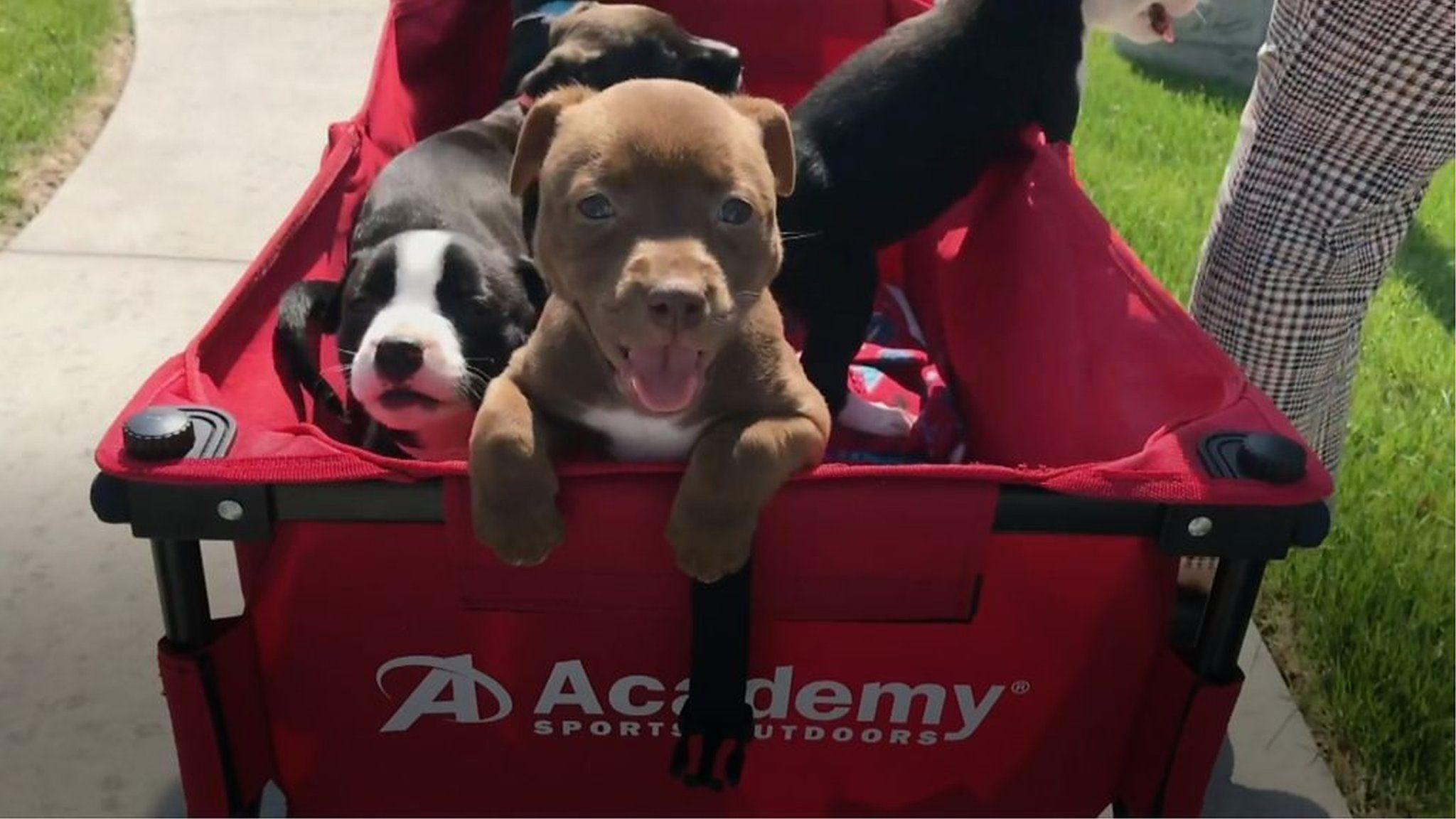 子犬にも教え子にも会える 「社会的距離」生活を思い切り楽しむ方法