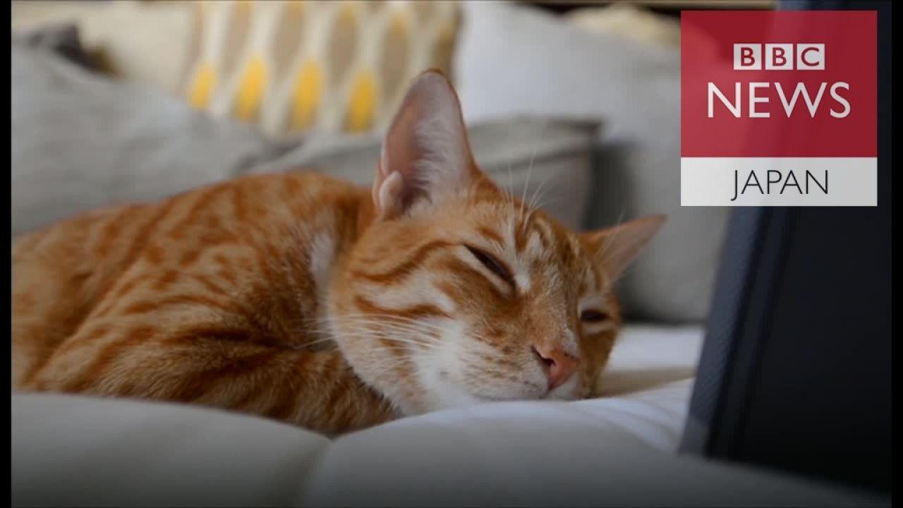 猫向け音楽 アルバムがチャート1位に
