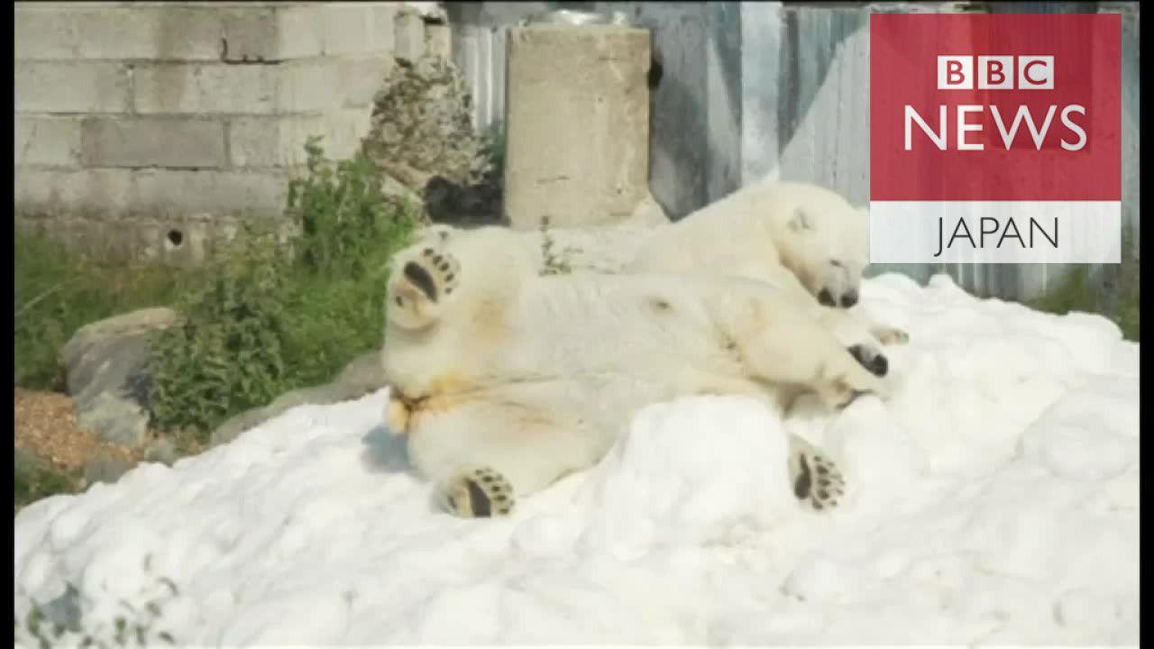 雪の贈り物にホッキョクグマ大喜び フィンランド