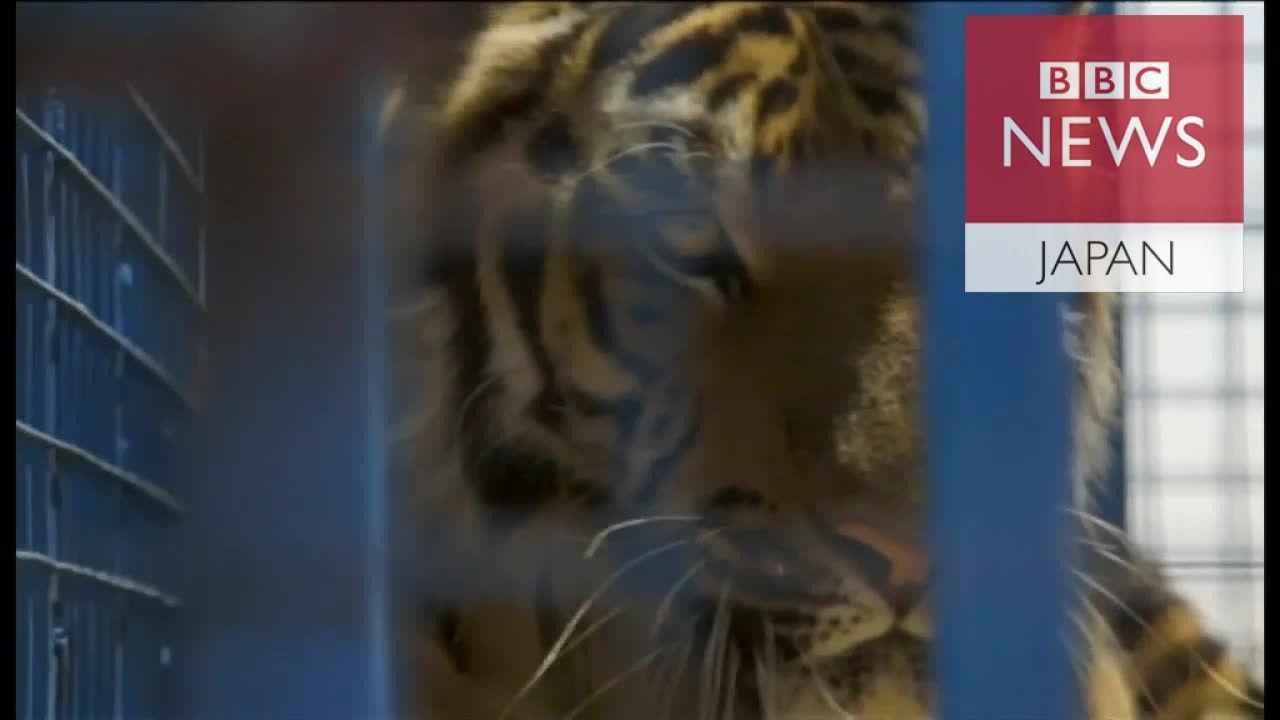 アレッポ動物園の動物たちをようやく救出 内戦続くシリア