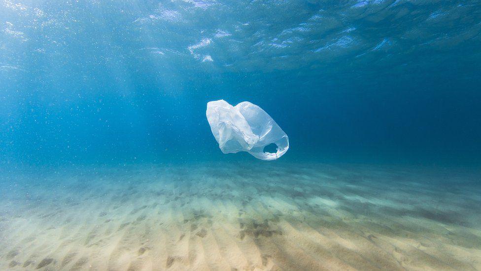 クジラの死体から計40キロのプラスチック袋
