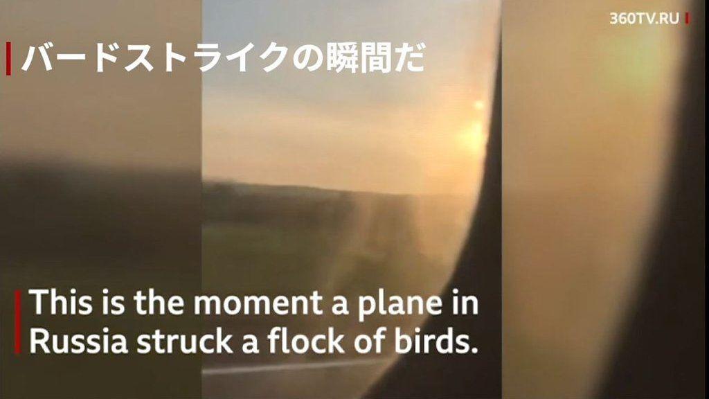 バードストライクで緊急着陸、ロシア旅客機 70人以上負傷
