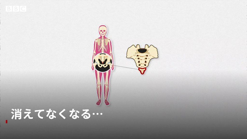 「男性の乳首」は役立たず 人体にとって不要な6つの部位