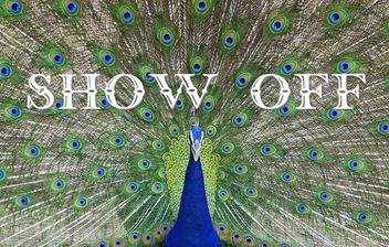 #086: show offの用法(ボキャビル・カレッジ・第86回)
