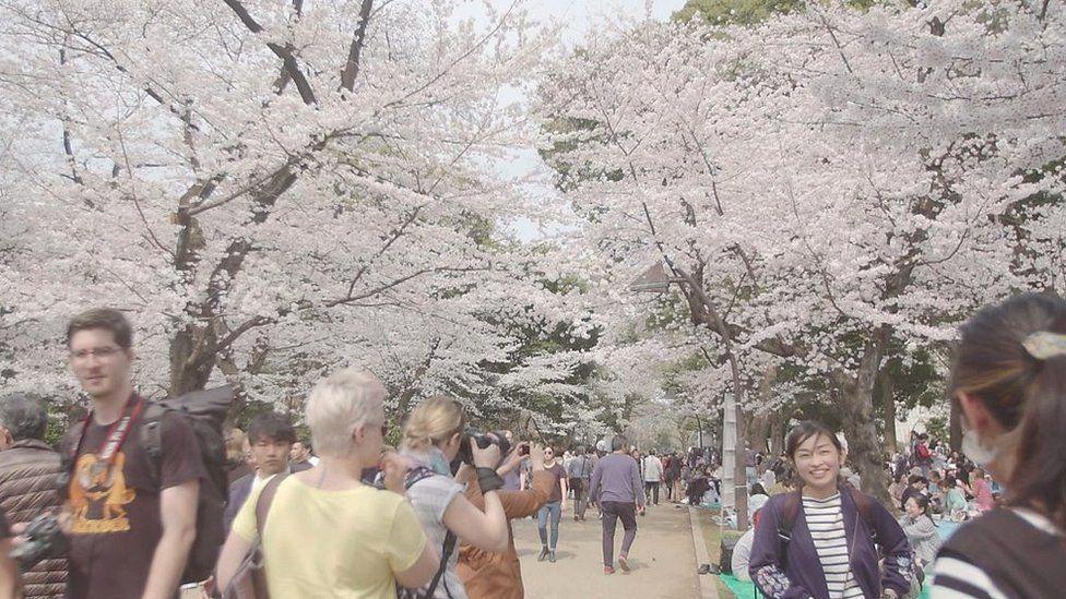 「魔法のような体験」 急増する海外からのお花見観光客