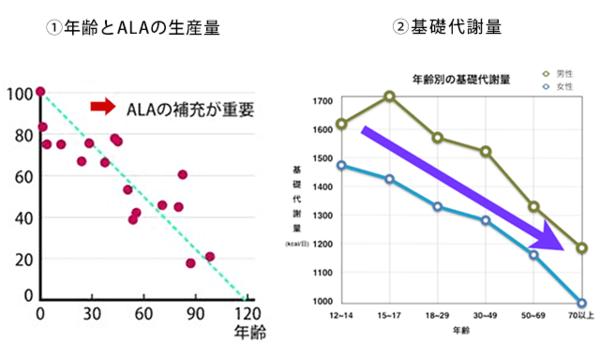 加齢による基礎代謝の減少とALA量の減少