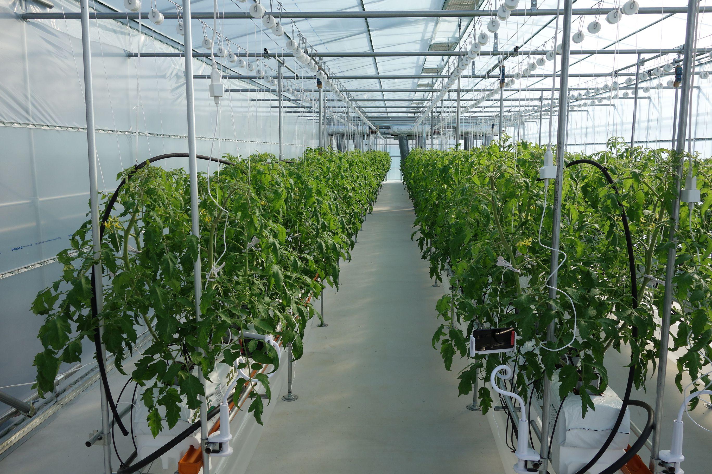 儲かる農業はIoTで実現できるか?ヤンマーが検証
