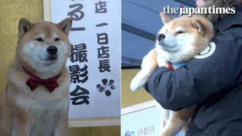 Maru the Shiba dog runs a department store in Tokyo, Japan