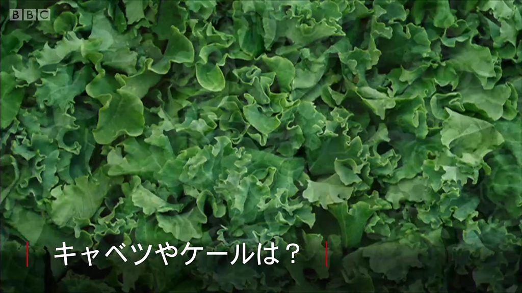 腸のがん予防に効く野菜、英研究で明らかに