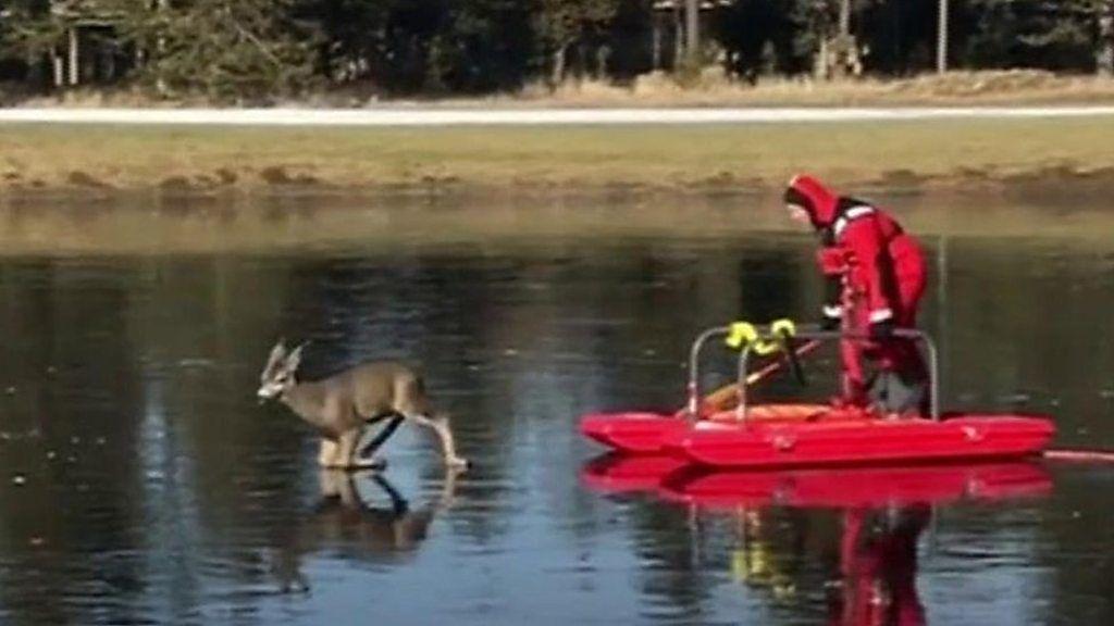 氷上で動けなくなった「バンビ」 消防隊員が救出