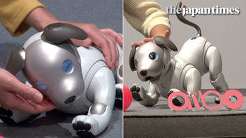 The Return of Aibo