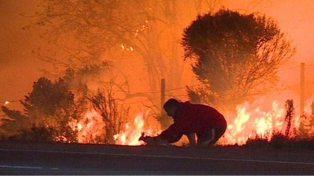 炎に向かうウサギ…男性が保護 ロサンゼルス山火事