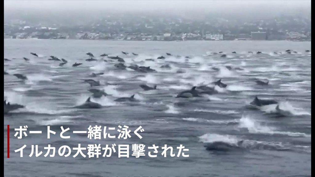 イルカ100頭が「突進」、ボートと並んで泳ぐ姿が目撃される 米カリフォルニア州