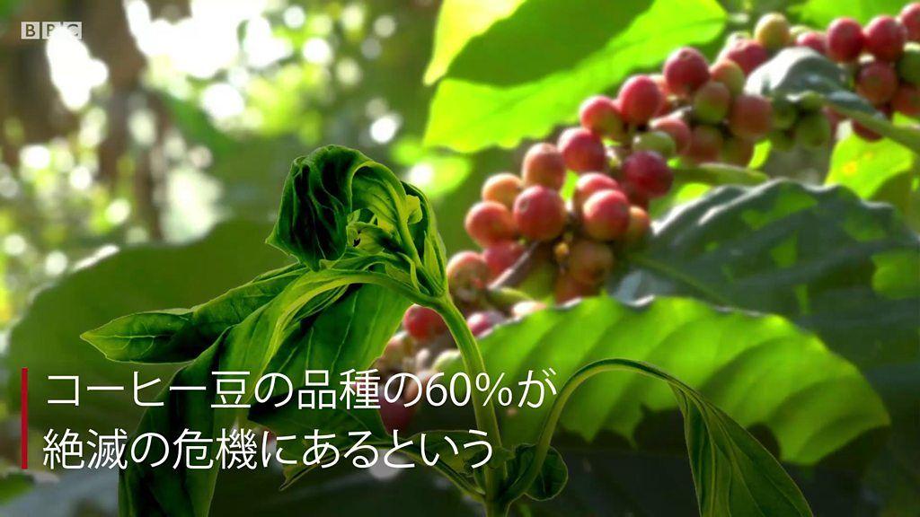 毎朝のコーヒーが危ない? コーヒーの野生種が絶滅の危機に