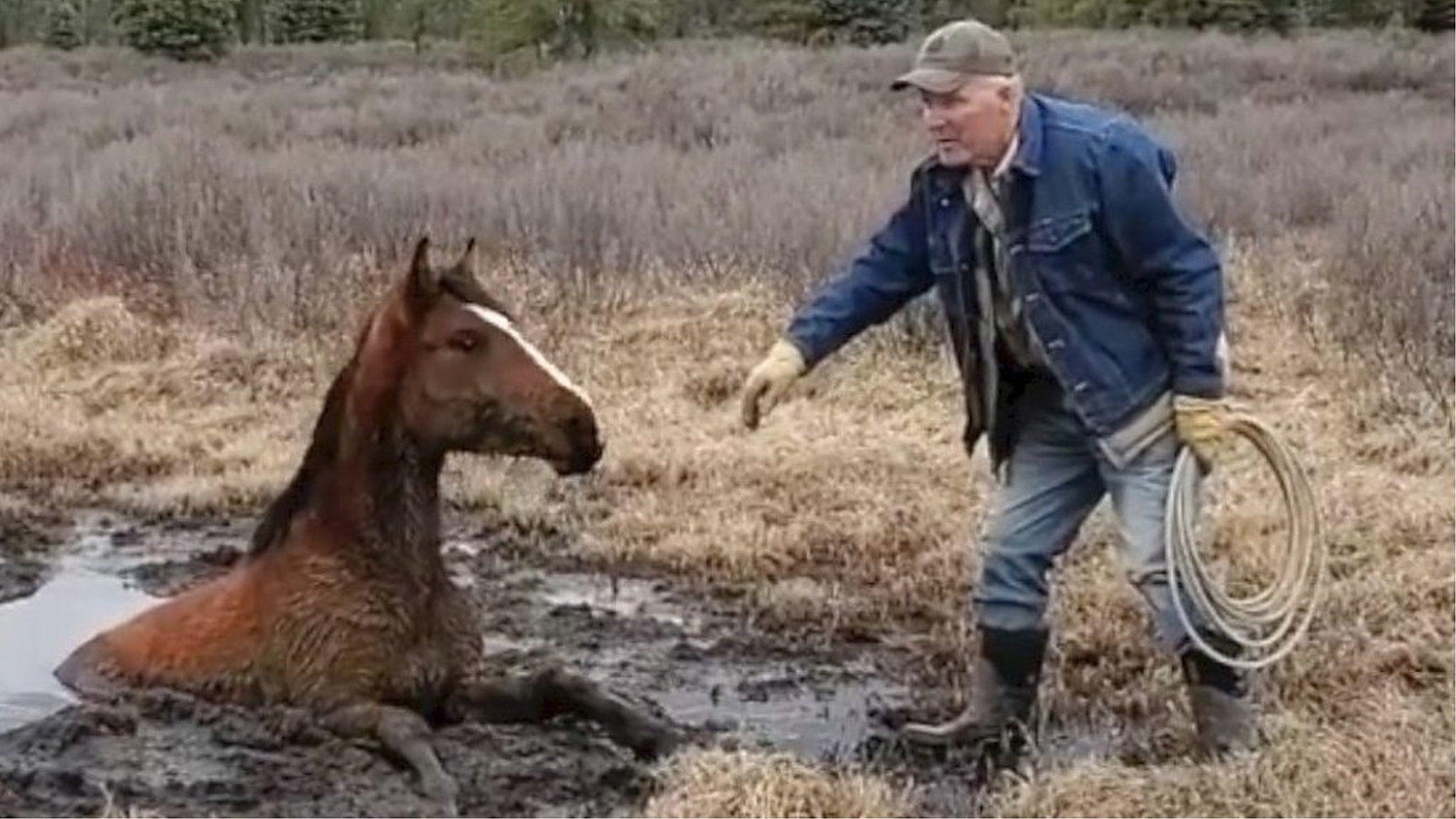 馬が沼にすっぽりと……45分かけて救出 カナダ・アルバータ州