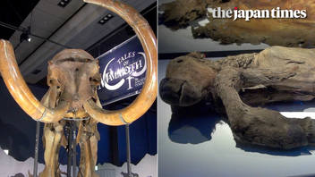"""The Mammoth"" exhibition at Miraikan"